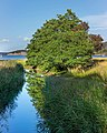 Common alders by a stream in Holma - hires.jpg