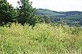 Conium maculatum (Habitat, Juli).jpg