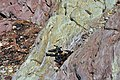 Contrast in rock and shingle - Warren Point - geograph.org.uk - 1394511.jpg