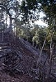 Copan-38-Pyramide-Baum-1980-gje.jpg