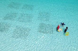 Ko Phi Phi Le - Coral propagation in progress at Maya bay