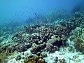 Coral Scene 18 (7157627625).jpg