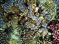 Corals fish.JPG