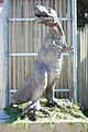 Cougar mountain zoo 0193.JPG