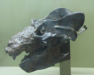 Gomphodontosuchinae subfamily of mammals (fossil)