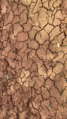 Cracked earth.png
