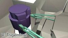 Datei:Anatomie der Hirnnerven in schematischer 3D.ogv