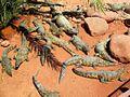 Crocoparc-Agadir-crocodiles-min.JPG