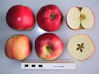 Cross section of Red Sudeley, National Fruit Collection (acc. 1967-078).jpg