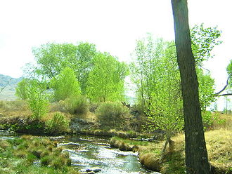 Crystal Springs, Nevada - The spring