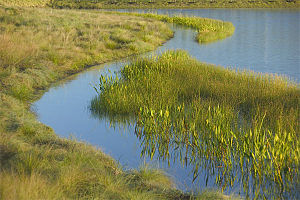 Lone Star College–CyFair - CyFair natural wetlands