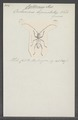 Cyrtomerus - Print - Iconographia Zoologica - Special Collections University of Amsterdam - UBAINV0274 033 07 0005.tif
