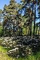 Dülmen, Welte, Rhododendronwald -- 2020 -- 6918.jpg