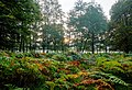 Dülmen, Wildpark -- 2015 -- 8818-22.jpg
