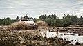 DMV Anaconda 4x4 test-2.jpg