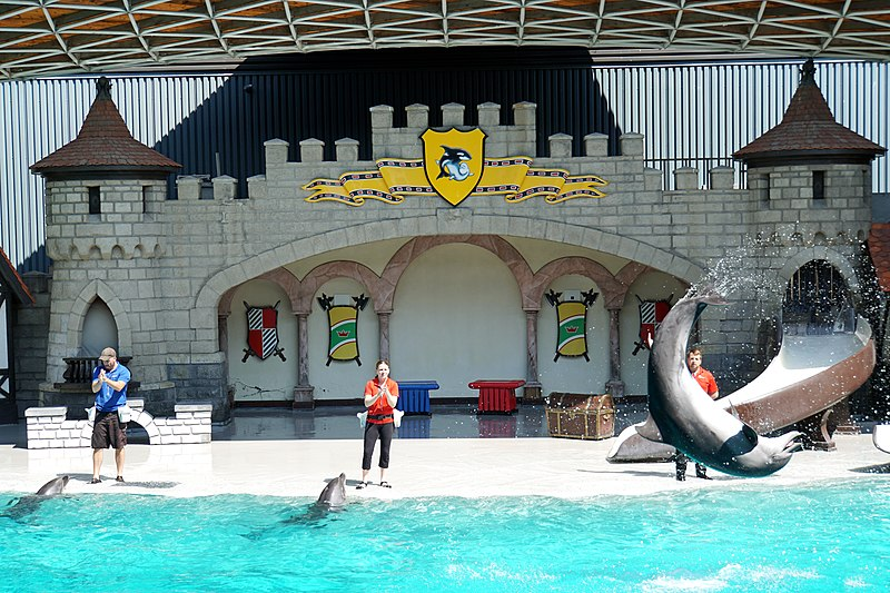 File:DSC09279 - Dolphin Show (36825274270).jpg