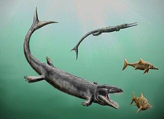 Dakosaurus - D. andiniensis pursuing ichthyosaurs with Cricosaurus in the background