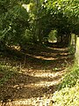 Dartmoor Way below Rora Down (2) - geograph.org.uk - 1013120.jpg