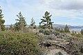 Davis Creek Park - panoramio (52).jpg