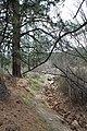 Davis Creek Park - panoramio (6).jpg