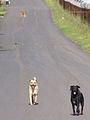 Dawg ride (7343740444).jpg