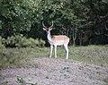 Deer (228949455).jpeg
