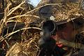 Defense.gov News Photo 081208-F-4707M-053.jpg