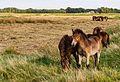 Delleboersterheide – Catspoele Natuurgebied van It Fryske Gea. Wandeling over de Delleboersterheide 09.jpg
