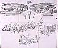 Denkschriften der Koniglichen Akademie der Wissenschaften zu Munchen (1816 - 1820) (20841386882).jpg