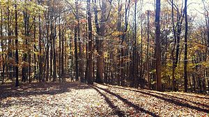 Derwood, Maryland - Autumn in Derwood
