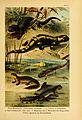 Deutschlands Amphibien und Reptilien (5981666559).jpg