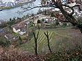 Deutschlands südwestlichster Weinberg am Grenzacher Hornfelsen.jpg