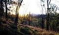 Dhammagiri Forest Hermitage, Buddhist Monastery, Brisbane, Australia www.dhammagiri.org.au 85.jpg