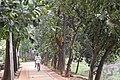 Dhanmondi 8 no lake Walk way.jpg