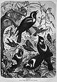 Die Gartenlaube (1872) b 435.jpg