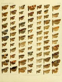<i>Acroclita</i> Genus of tortrix moths