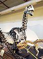 Dinosaur skeleton.jpg