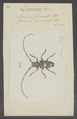 Diochares - Print - Iconographia Zoologica - Special Collections University of Amsterdam - UBAINV0274 034 05 0003.tif