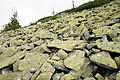 Doboshanka stone run 2.JPG