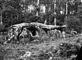 Dolmen de la Contrie du Rocher - Ernée - Médiathèque de l'architecture et du patrimoine - APMH00008312.jpg
