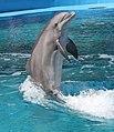 Dolphin 4 (15377294547).jpg