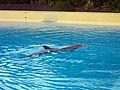 Dolphins (7981082378).jpg