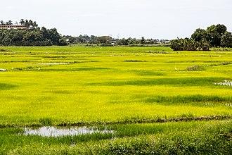 Penampang District - Kodundungan plain.