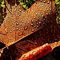 Droplets - Flickr - Stiller Beobachter.jpg