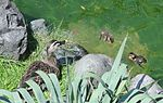 Ducks of Zama 101 130703-A-VH820-244.jpg