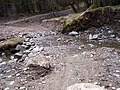 Dunoon, Tom Odhar-Bishops Glen Track - geograph.org.uk - 150135.jpg
