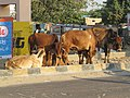 Dwaraka and around - during Dwaraka DWARASPDB 2015 (194).jpg