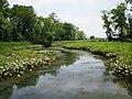 Dyke Marsh.jpg