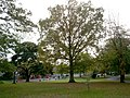 Eden Villa Park, Bachelors Walk, Portadown - geograph.org.uk - 587955.jpg