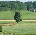 Einsamer Baum - panoramio.jpg